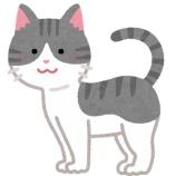 『【画像】子猫保護系YouTuberさん、年収1億円越えてたことが判明』の画像