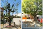 JR河内磐船駅前のもっさりしている木がバッサリ切られてる!