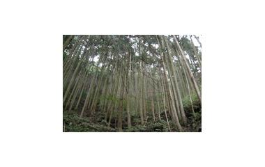 『住みかの少ない森』の画像