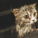 【必見】猫の上手な洗い方とは?