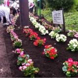 『戸田市かじや緑地花の植え替え』の画像