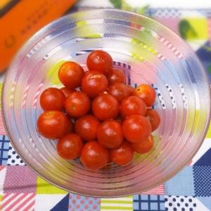 スナック感覚で頂ける♪ミニトマトのおつまみサラダ