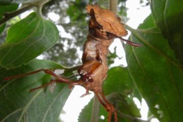 【特集】世界の不思議な昆虫、生物たち