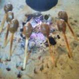 『しんごろう焼き』の画像