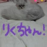 『マッサージ♪足つぼ♪針♪』の画像