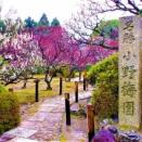 京都 随心院(小野小町ゆかりの寺ではねず梅の名所☆ 小野梅園を拝観☆ 雨風が強かったので貸切状態だった !)  2008年3月中旬