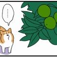 きのみをボディプレスする習性がある柴犬の見せた「慈悲」