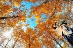 秋。交野いきいきらんどに紅葉ドームが生まれる!? ~交野さんぽ72~