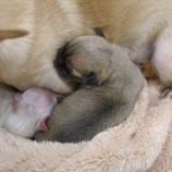 『犬の赤ちゃんの成長』の画像