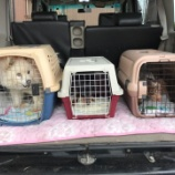 『センターより犬3頭を受け入れました。』の画像