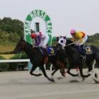『スーパーマックスが圧倒的人気に応えV/九州ダービー栄城賞・佐賀』の画像