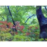 『秋が来ました』の画像