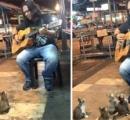 ストリートミュージシャンが歌ってたら何故か猫が集まってきて座って夢中に聴く 可愛すぎワロタ