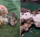 ごみ箱からスプレー缶の泡で覆われた生後8カ月の子猫救出 指紋を採取へ オレゴン州
