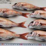 『国東の食環境(265)鯛』の画像