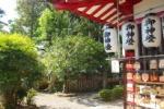 短冊の代わりはこれだ!『多羅葉樹』っていう伝説の木が、七夕発祥の地。機物神社にはある!