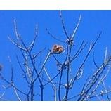 『落ちない栗』の画像