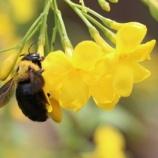 『都会のハチを守る「ビー・ハイウェイ蜂の道」』の画像