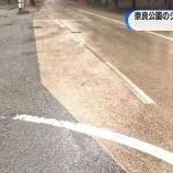 『奈良のシカ死なせた犯人 吉井勇人の顔写真の画像が公表されない理由がやばい』の画像