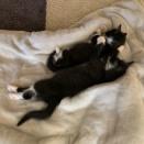 大きくなってきた子猫たち