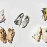 『7/10 9:00 発売 ナイキ ISPA 2020 コレクション』の画像