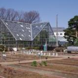 『3月の都立薬用植物園①』の画像