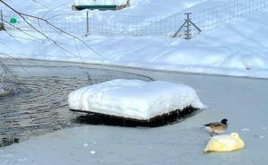 """極寒のスイスで""""暖房トラブル"""""""