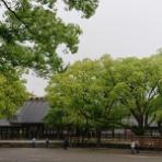 goriさんの雑木林