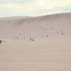 『夏。山陰紀行。鳥取砂丘へ』の画像