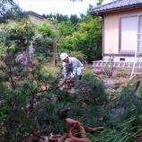 『松の木の伐採』の画像
