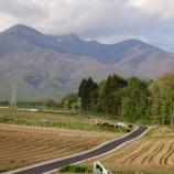 『春の野』の画像