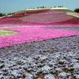 『絶景 芝桜 茶臼山高原』の画像