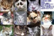 暴力団組長のネコが逃走、捕獲しようとアーケード上に立ち入った組員を書類送検→結局猫は捕まらず一週間後に自分で帰ってくる