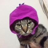 『家の猫はどこから来たのか覚えてますか?』の画像