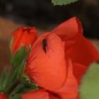 『庭の不思議な住人~寄生する虫~』の画像