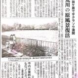 『(埼玉新聞)戸田ケ原で桜草満開 荒川の原風景復活』の画像