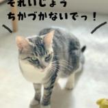 『きょうのいちまい・猫は執着する生き物』の画像