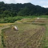 『体験会以外の日の稲刈りはこんな感じで進みます』の画像