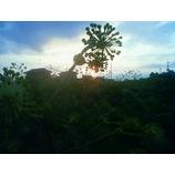 『陰影の世界』の画像
