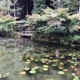『モネの池(岐阜県関市板取)をスマホで撮影する時のコツを写真付きでご案内します。』の画像