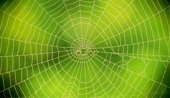 クモが巣を作るときの最初の一本ってどうやって設置してんのあいつら?