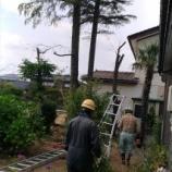 『木登り 「与作」 木を切る』の画像