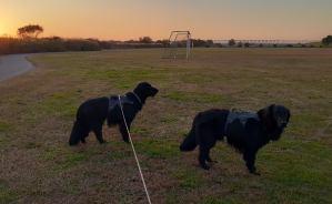 愛犬と散歩に行った河川敷の風景