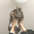 ウサギが飛んだ