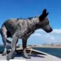 犬が「ボート」に乗っていた。どっちが速いの? よし、競争だワン! → 犬はこうした…
