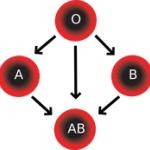 カナダの学者 あらゆる血液型をO型に変える方法を発見 全員O型になっちまおうぜ!
