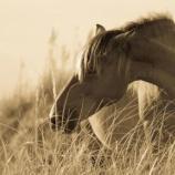 『薬草と話す野生動物たち』の画像