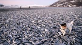 動物の謎の大量死が相次ぐ・・・世界の終わりの前兆か