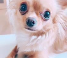 『【悲報】岡井千聖の愛犬パンツ亡くなる』の画像