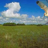 『行った気になる世界遺産 エバーグレーズ国立公園』の画像